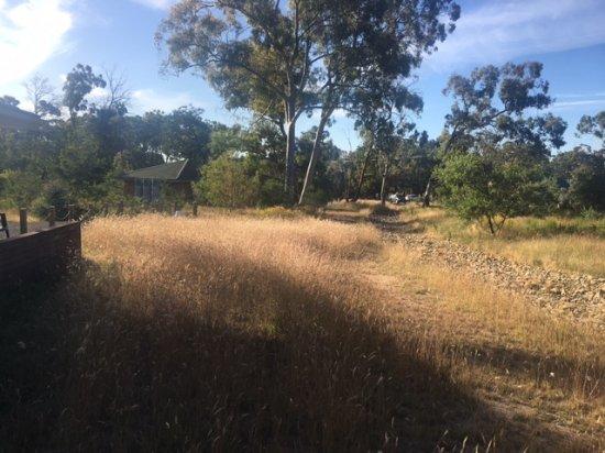 Kyneton, ออสเตรเลีย: Wallaby grass