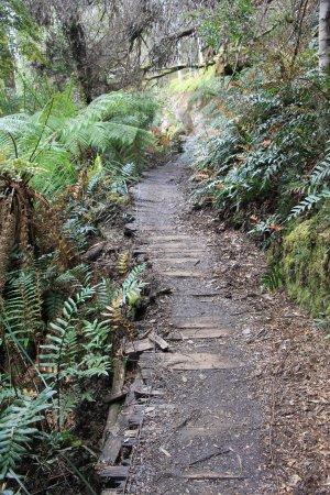 Tasmania, أستراليا: Part of the walk
