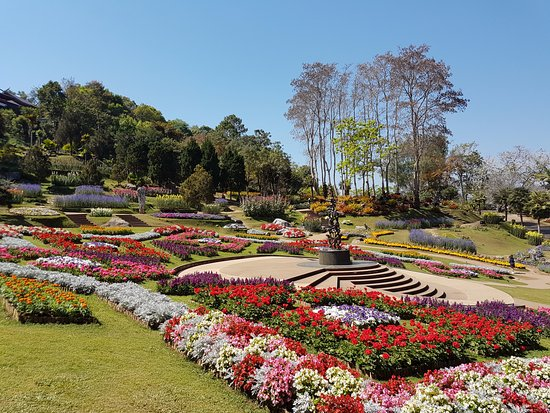Doi Tung Royal Villa : More flowers