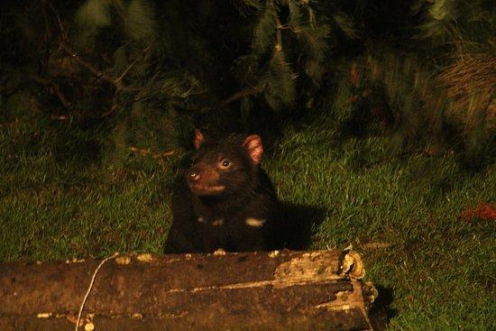 Mountain Valley Wilderness Holidays: Tassie Devil