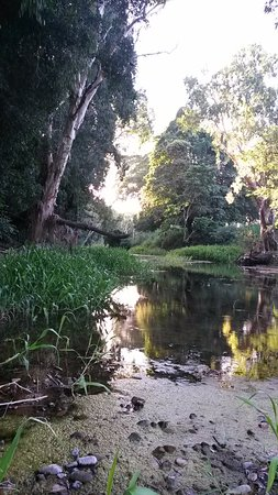 Carmila, Australia: Creek behind park is lush and peaceful. Great bird watching.