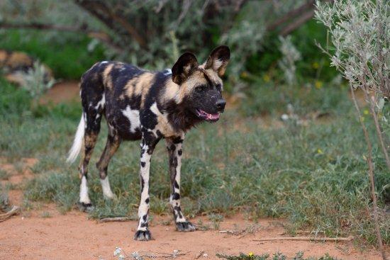 Фотография N/a'an ku se Lodge and Wildlife Sanctuary