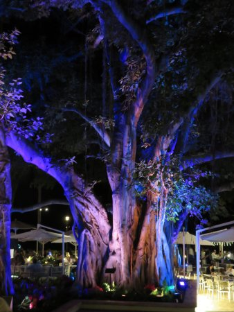 Banyan Tree In Courtyard By The Beach Bar Specialty Lighting