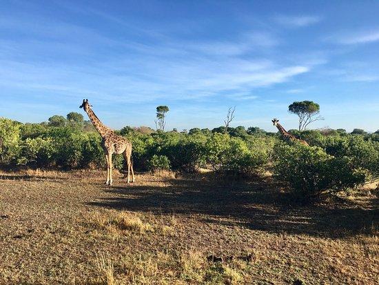 Fairmont Mara Safari Club: photo6.jpg