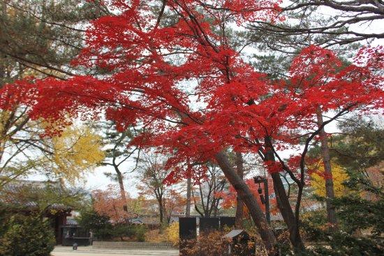 Jongmyo Shrine : 紅葉の宋廟