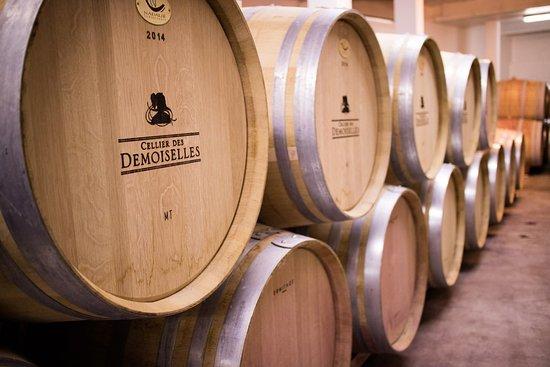 Saint-Laurent-de-la-Cabrerisse, France: Le fût de chêne pour l'excellence du vin