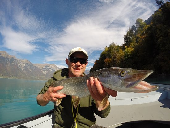 Wilderswil, Switzerland: fly fishing in Switzerland, flyfishing guide Switzerland, pike on a fly