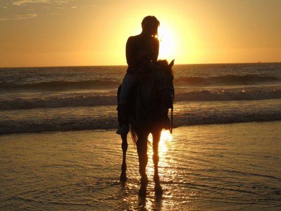 Horse Camel Agadir Ranch Acienda