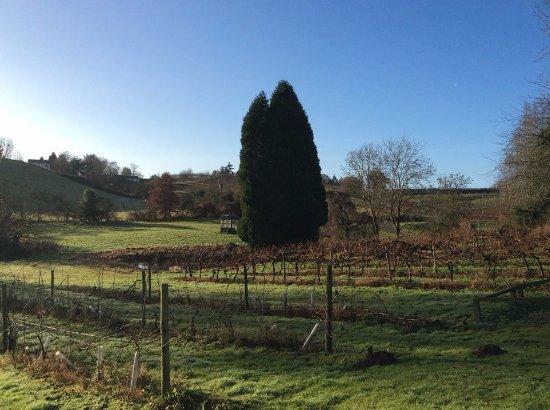 Newent, UK: Vineyard