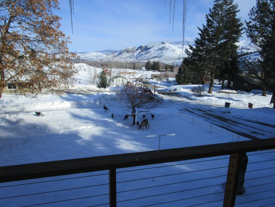 Methow Suites Bed and Breakfast: View from Living area