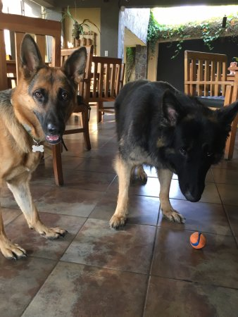 Pura Vida Hotel: Ziva and Bandit are super friendly and love to play!