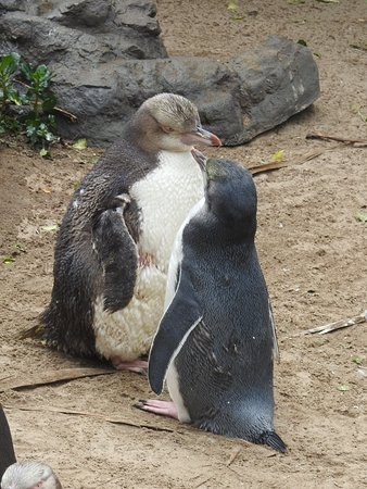 Penguin Place: Did you hear the one about... Penguin Place