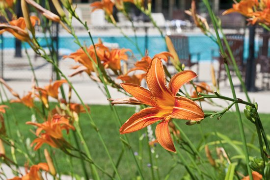 Fontana Dam, Kuzey Carolina: Summer at the Lodge Pool