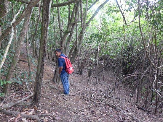 Rupununi, Guyana: Chalie leading the Capuchin bird trail