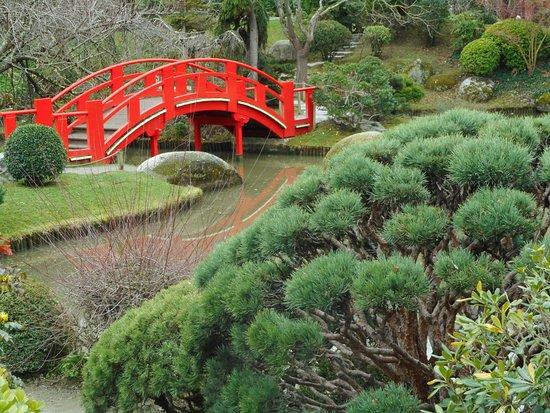 le chat du jardin japonais picture of jardin japonais toulouse tripadvisor. Black Bedroom Furniture Sets. Home Design Ideas