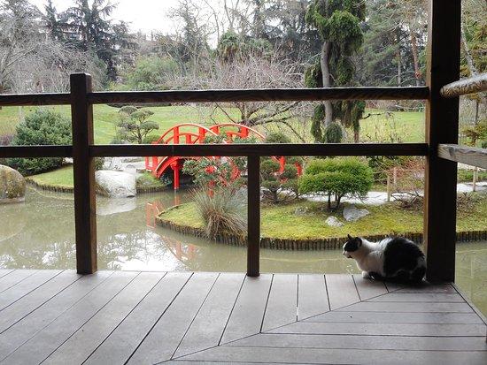 Le chat du jardin japonais picture of jardin japonais for Le jardin japonais toulouse