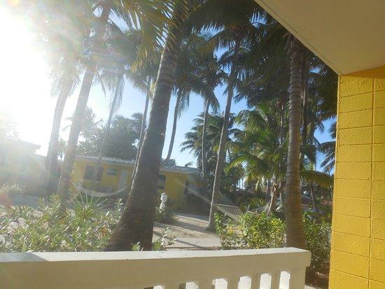 Bimini Big Game Club Resort & Marina: Garden view from Ground floor patio