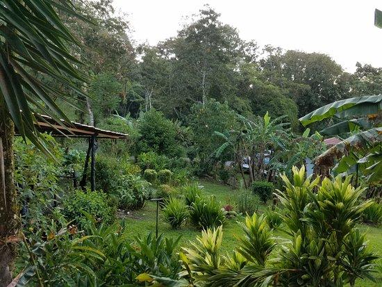 Nuevo Arenal, Costa Rica: Lush