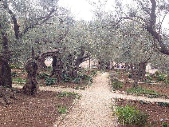 Garden of Gethsemane: photo2.jpg