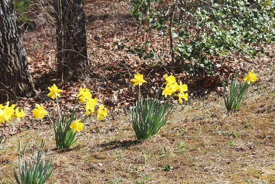 Spring flowers smiling in the sunshine picture of the north the north carolina arboretum spring flowers smiling in the sunshine mightylinksfo