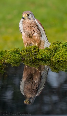 Cumberland Bird Of Prey Centre: At the reflection pool
