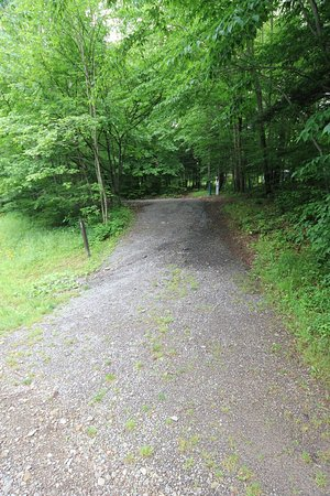 Allegany State Park: Our steep camping spot