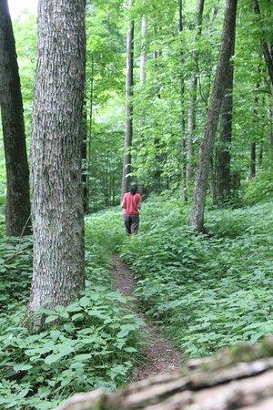 Allegany State Park: Enjoying our new trek