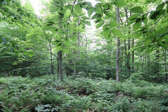 Salamanca, Estado de Nueva York: I loves these trees!