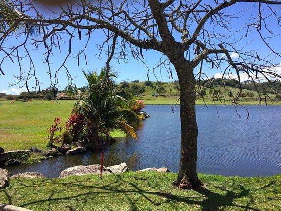 Palmas Del Mar Golf Club : @ the Flamboyan