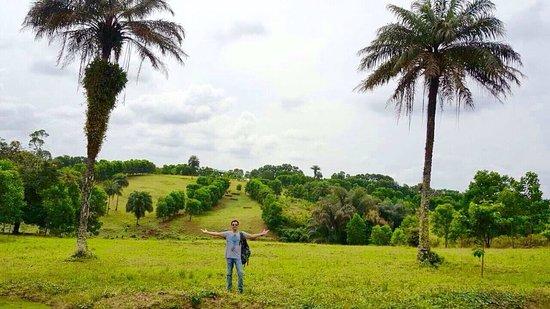 Wulki farms