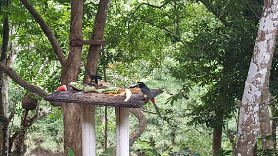 Mystic River Resort: Toucans