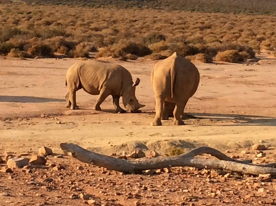Touwsriver, Sudáfrica: Game Drive