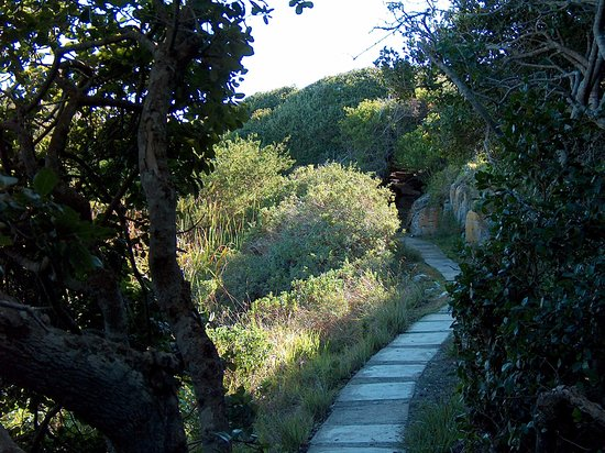 Hermanus, África do Sul: Foot paths along the shore on your way to Grotto Beach