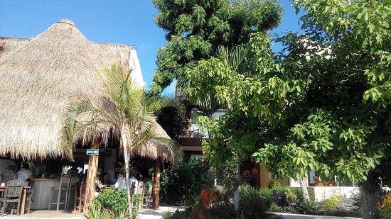 Villas Bakalar: Pollbar und rechts davon, Zimmerterrasse hinter dem Baum