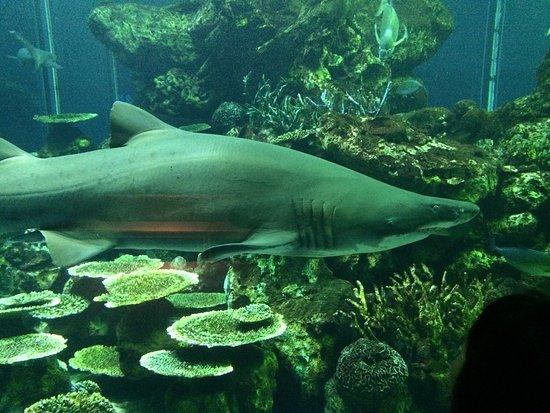Tokai University Marine Science Museum