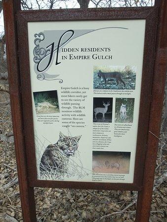 Sonoita, AZ: Residents of Empire Gulch