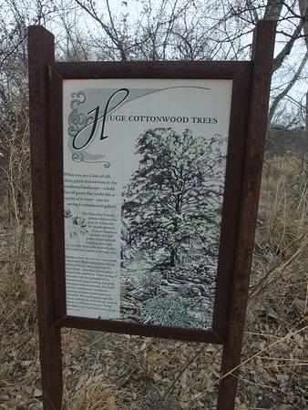 Sonoita, AZ: Cottonwood story