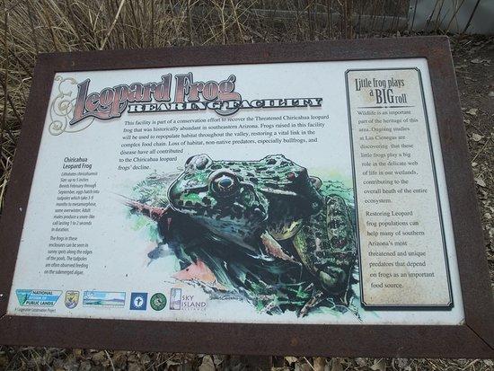 Sonoita, AZ: Leopard Frog Conservation