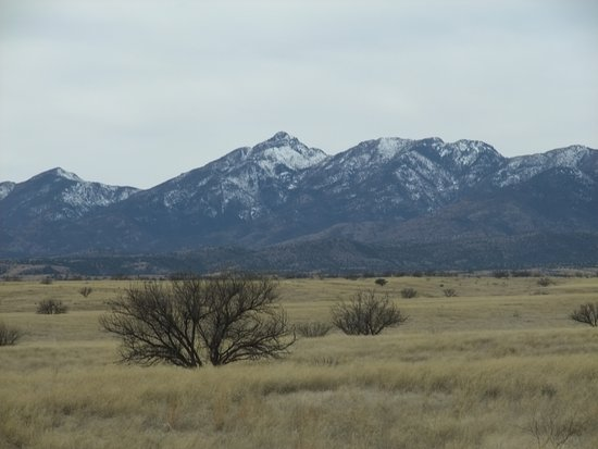 Sonoita, AZ: grass is recovering