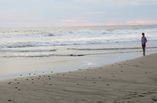 Playa Buenavista: The last of today's hatched turtles are entering the water
