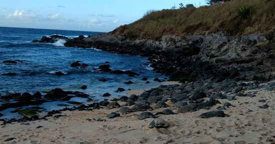 Paia, HI: All of those are turtles! Around 5pm in February, more arriving constantly.