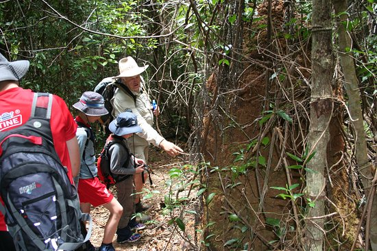 Tropical Treks Guided Bush Walks