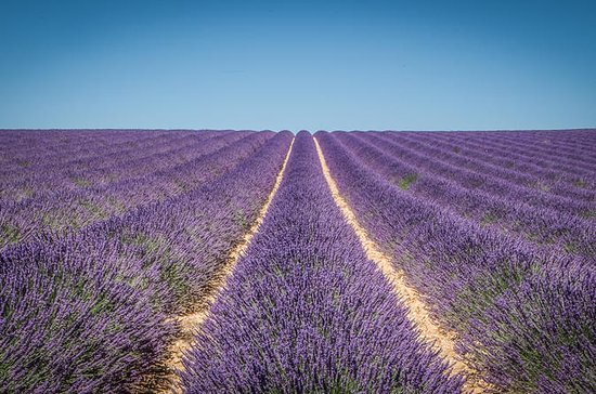 Small-Group Lavender tour of Valensole...
