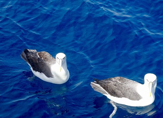 Coast up Close: Albatross pair