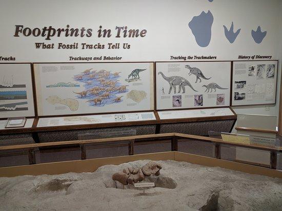 Dinosaur Valley State Park: Museum