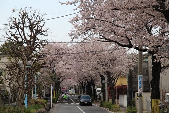 Nishi Yoga Street