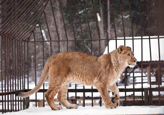 Verbilki, Russia: Зоопарк в отеле Country Resort