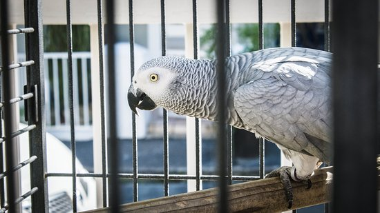 Wilton Manor Guest House: Lisa the parrot