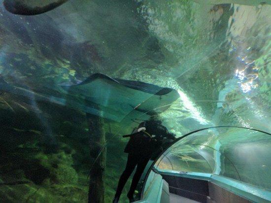 Manly Sea Life Sanctuary - Shark Dive Xtreme: photo0.jpg