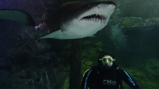Manly Sea Life Sanctuary - Shark Dive Xtreme: photo2.jpg